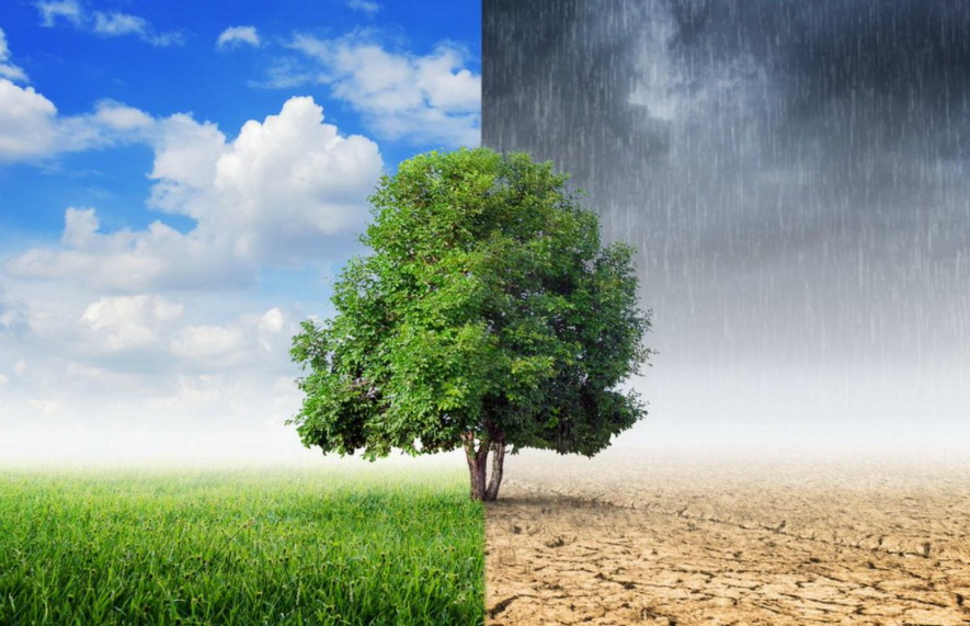 Дерево, ясно, пасмурно